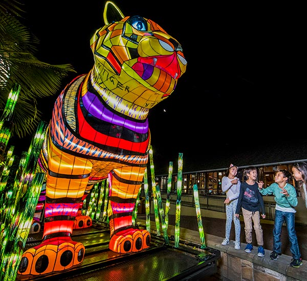 Vivid Lights – Taronga Zoo Lights for the Wild!